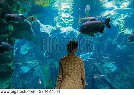 Woman Silhouette Looking At Fish In Large Public Aquarium Tank At Oceanarium. Aquamarine Low Light I