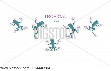 Tropical Frogs. Vector Icon Green Character. Set. Funny Little Frogs In Cartoon Style