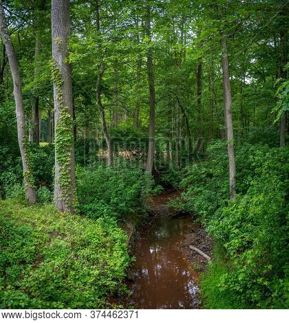 A Small Creek Runs Through The Forest In Freneau Woods Park In Matawan New Jersey.
