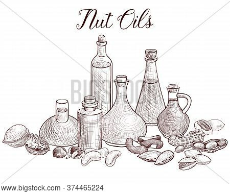 Vector Drawing Nut Oils, Bottles Of Vegetable Oil And Nuts, Hand Drawn Illustration