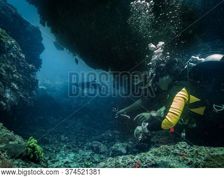 Scuba Divers Are Excited Looking At A White-tip Reef Shark At A Tropical Coral Reef In Gato Island,