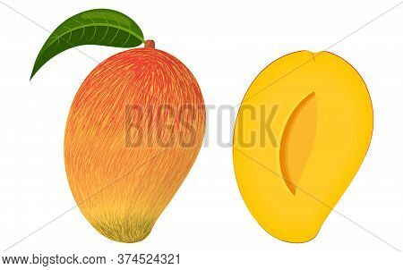 Cartoon Detailed Exotic Whole And Half Mango Isolated On White Background. Summer Fruits For Healthy