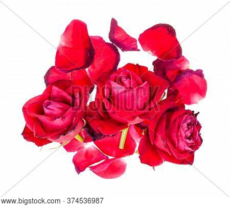 Top View Of Pile Of Fallen Petals And Withered Blooms Of Red Rose Flowers Isolated On White Backgrou