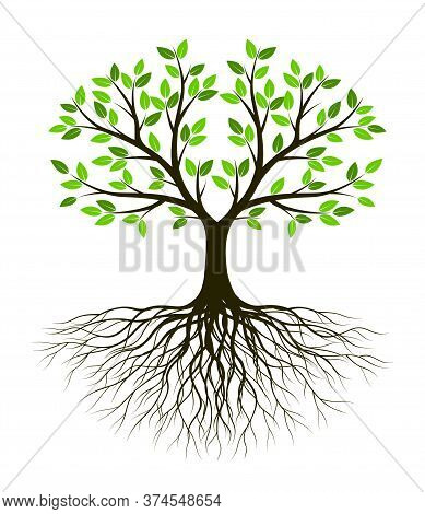 White Tree Of Life On Green Background. Silhouette Shape With Leaves And Roots. Vector Outline Illus