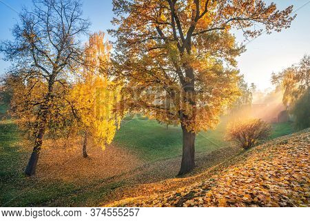 The Rays Of The Autumn Sun Through Golden Trees In A Ravine In Tsaritsyno Park In Moscow In The Earl