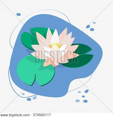 Flower And Leaves Of Lotus, Water Lily, White Water Lily. Green Leaves, Pink Flower, Blue Water. Vec