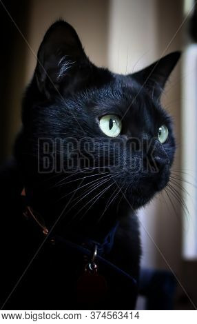 Close Up Of Black Cat Face With Bright Green Eyes With Focus On Eye And Whiskers.