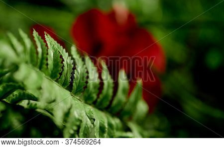 Leaf Of Pure Green Fern Coarsely With A Blurred Red Flower Against The Background