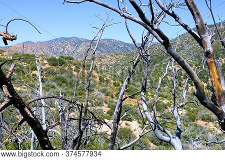 Burnt Branches Caused From A Past Wildfire Surrounded By Parched Badlands Of Rolling Hills Covered W