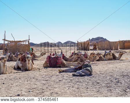 Bedouin Village In Desert, Egypt - February 2020: Two Camel Drivers Resting Near Their Herd, Medium