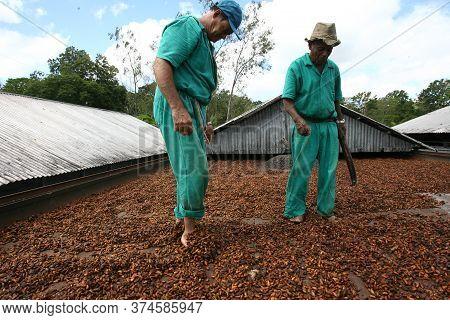 Ilheus, Bahia / Brazil - March 21, 2011: Farmer Drying Cocoa Beans On A Farm In The City Of Ilheus.