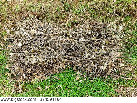 Photo Of Sticks Of Kindling Wood Laid On The Surface Of Ground For Make Them Dry