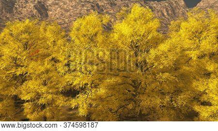 Aspen valley in Colorado during Autumn