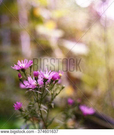 Beautiful Blured Purple Flower In Topical Garden
