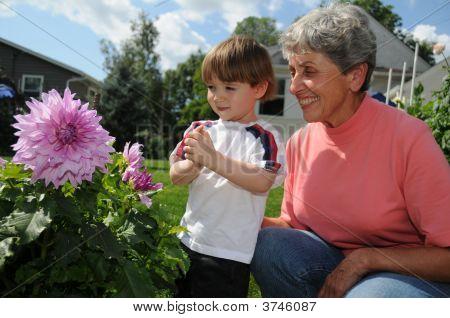 Grandma\'S Dahlia