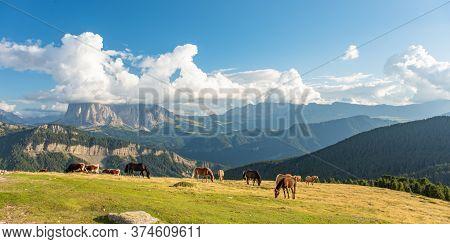 Horse Over Dolomite Landscape Geisler Or Odle Mountain Dolomites Group, Val Di Funes, Tourist Region