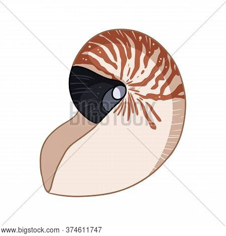 Nautilus Shell Colorful Doodle Isolated On White Background Vector Illustration. Hand Drawn Sea Shel
