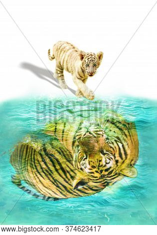 Conceptual: A Small Tiger Cub Reflected In A Pool Of Water, Seeing A Mirrored Adult Tiger Inside. Co