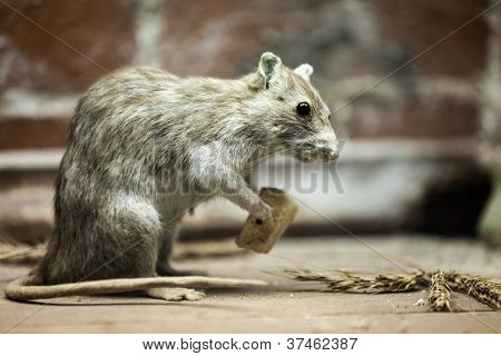 poster of Rodent rat animal holding piece of bread food