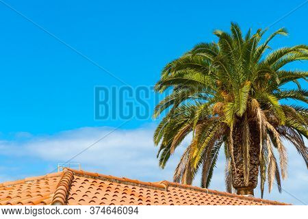 Beautiful Green Palm Trees Against The Blue Sunny Sky Behind The Tiled Roof. Tropical Wind Blow The
