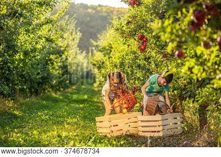 Photo Of Little Sister And Brother Gathering Apples To Bake Apple Pie On Winter Holidays.