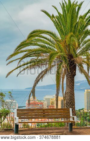 Beautiful Green Palm Tree With A Bench On A Cliff Against The City Below And Blue Sunny Sky Backgrou