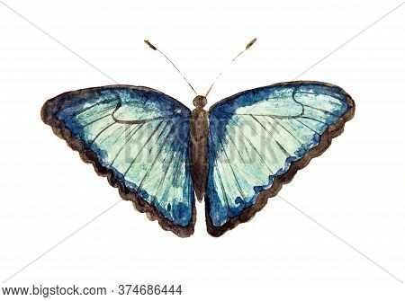 Watercolor Drawing Of Blue Butterfly Isolated On The White Background. Handmade Illustration Of Butt
