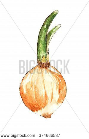 Watercolor Drawing Of Leek Isolated On The White Background. Illustration Of Raw Leek.