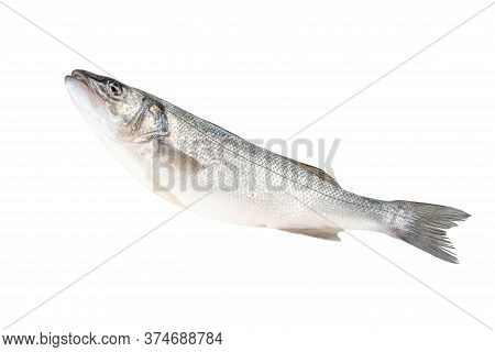 Raw Fresh Seabass Fish Isolated On White Background. Food Concept.