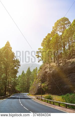 Winding Road In A Mountain Forest. Bright Green Forest And Bright Sun Shine.