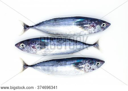 Three Sea Sardines On White Background, Sea Food Cooking Top View Photo. Fresh Marine Fish Catch. He