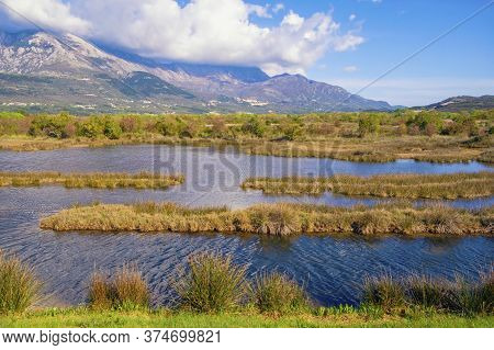 Beautiful Sunny Wetland Landscape. Montenegro, Tivat. View Of Tivat Salina  ( Tivatska Solila ) On S