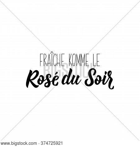 Fresh Like Evening Rose In French. Ink Illustration. Modern Brush Calligraphy. Isolated On White Bac