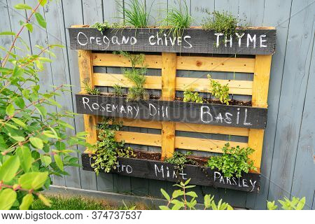 Creative Wood Herb Planter Made Of Wooden Pallets Pallet Hanging On The Grey Fence In A Backyard. Ga