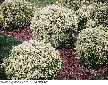 A Lawn Of Decorative Red Slivers With Round Shrubs Of White Turf Splintering On It