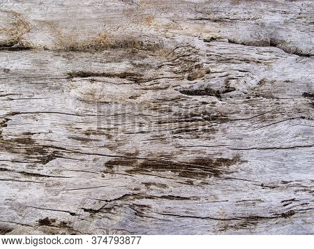 Aged Wooden Texture Closeup. Raw Timber With Grungy Cracks. Natural Surface For Vintage Background.