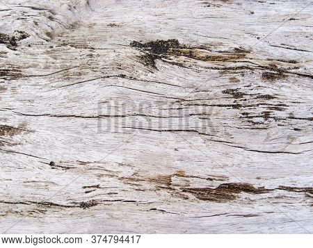 Rough Wooden Texture Closeup. Raw Timber With Grungy Cracks. Natural Surface For Vintage Background.