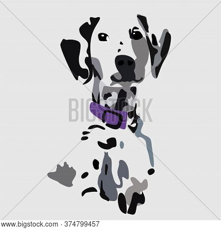 Cute, Beautiful Dalmatian Dog Looking Straight, In A Purple Collar .vector Illustration Isolated On