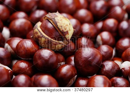 lots of lovely chestnuts - fall time