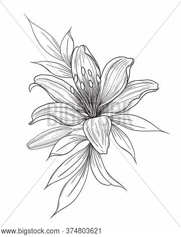 Hand Drawn Lily Flower, Bud And Leaves Isolated On White. Vector Monochrome Elegant Floral Compositi