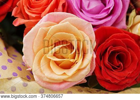 Mixed Colorful Roses Full Blooming. Beauty Roses Flowers