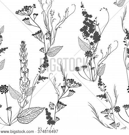 Graphic Monochrome Seamless Pattern With Wildflowers Flowers, Pods, Leaves And Inflorescences. Eleme