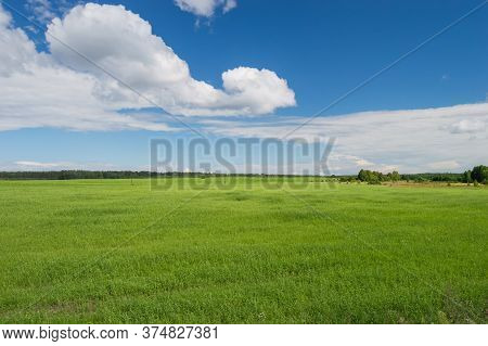 Cleared Scene Of Blue Sky And Green Grass Field Only Nature. Concept Or Conceptual Green Fresh Summe