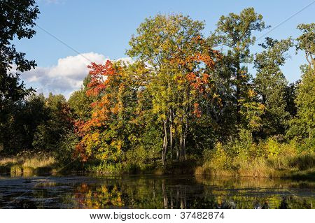Autumn Landscape On The River Bank