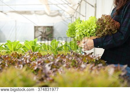 Consumers Stand To Hold Salad Vegetables And Receive Quality And Non-toxic Products. In A Farm To Gr