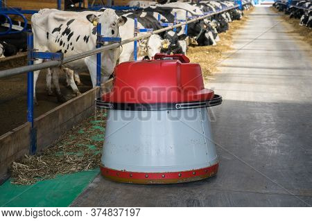 Robot Feed Pusher On A Dairy Farm With Cows. Robot Moves Hay In Dairy Production