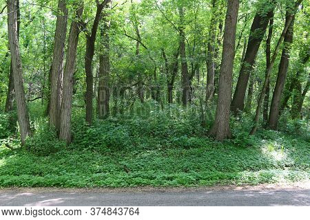 A Lush Tranquil Forest Woodland Growth On A Sunny Day