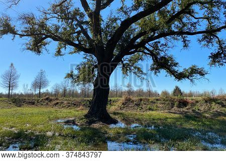 A Large Tree In A Marsh Pond With Shadows And Reflection On A Sunny Day