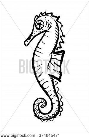 Seahorse Black Line Sketch On White Background. Oean Wild Nature Animal.