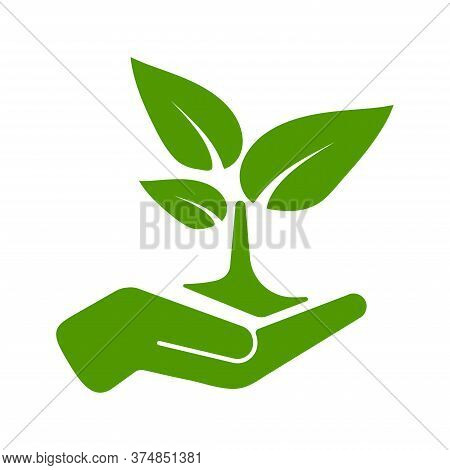 Green Tree Growing In Hand Vector Illustration. Hand Holding Plant Tree Icon Isolated On White Backg